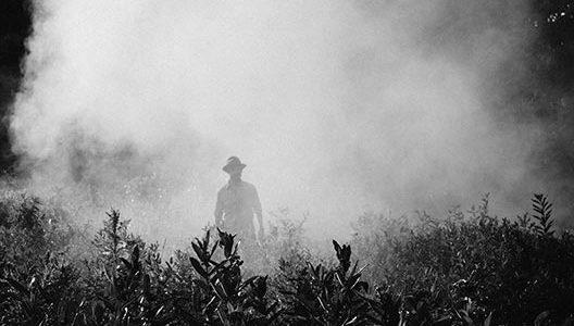 brouillard-pesticidesfog-918976_1280